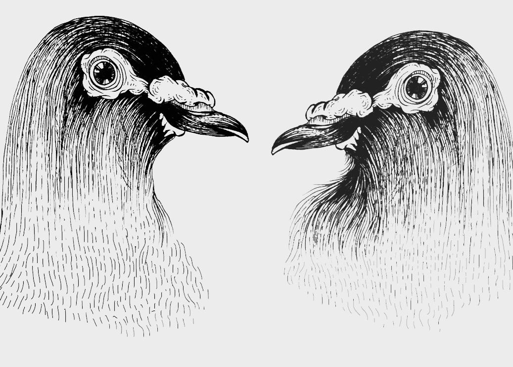 AMACULTURE Birds Gabrielskloof 1