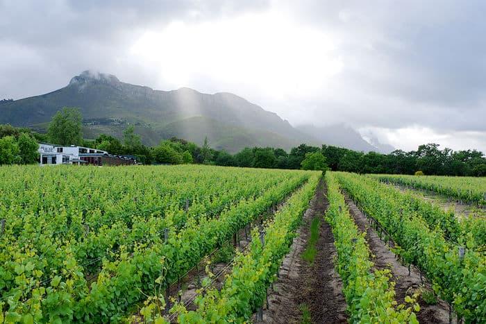 Lanzerac Vineyards5-web
