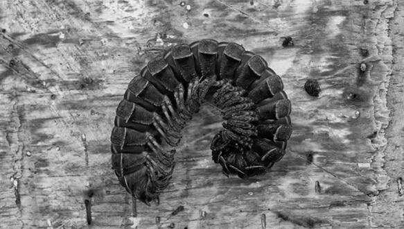 Frame from Cautivos, by Felipe Esparza Pérez