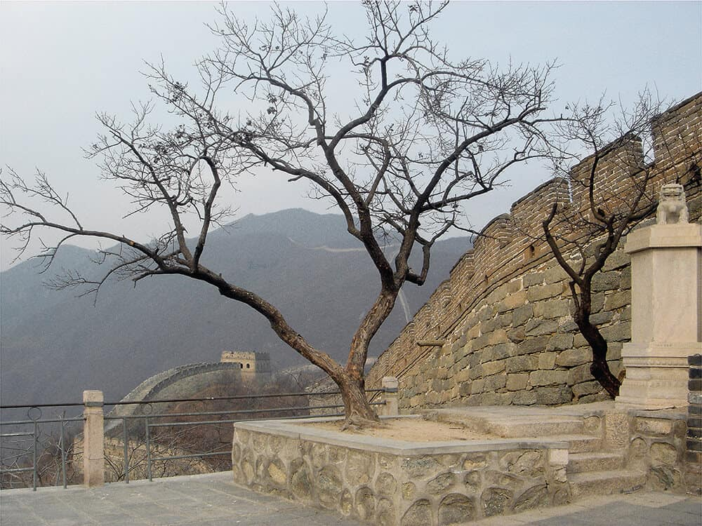 James Webb, There's No Place Called Home (Great Wall), 2005. Calls of a Golden-bellied Flycatcher broadcast from speakers concealed within the trees along the Great Wall of China. Image courtesy of the artist, blank projects, and Galerie Imane Farès.