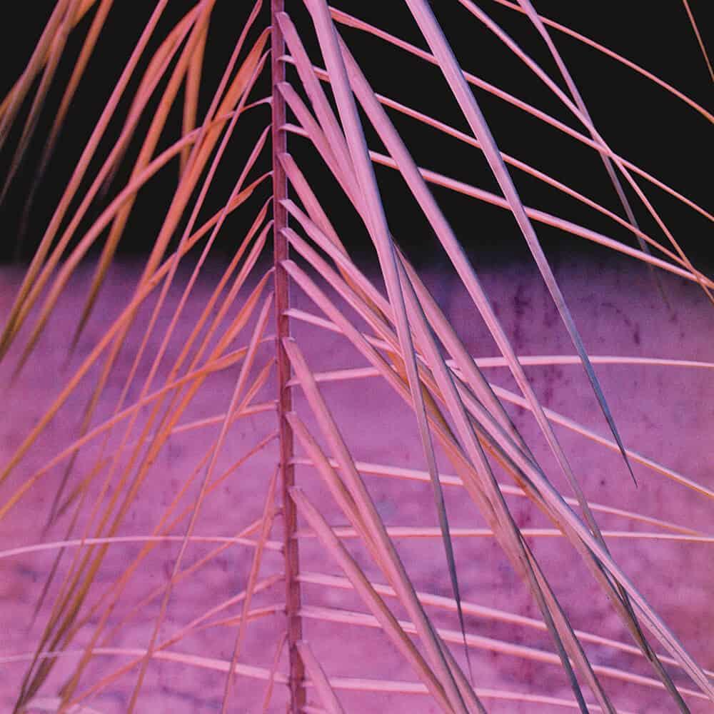 PÁGINA OPOSTA: Adam Broomberg, Kodak Ektachrome, 34, 1978, quadro 4, 2012. Impressão C-41, 120 x 120 cm. A imagem foi cortesia do artista.