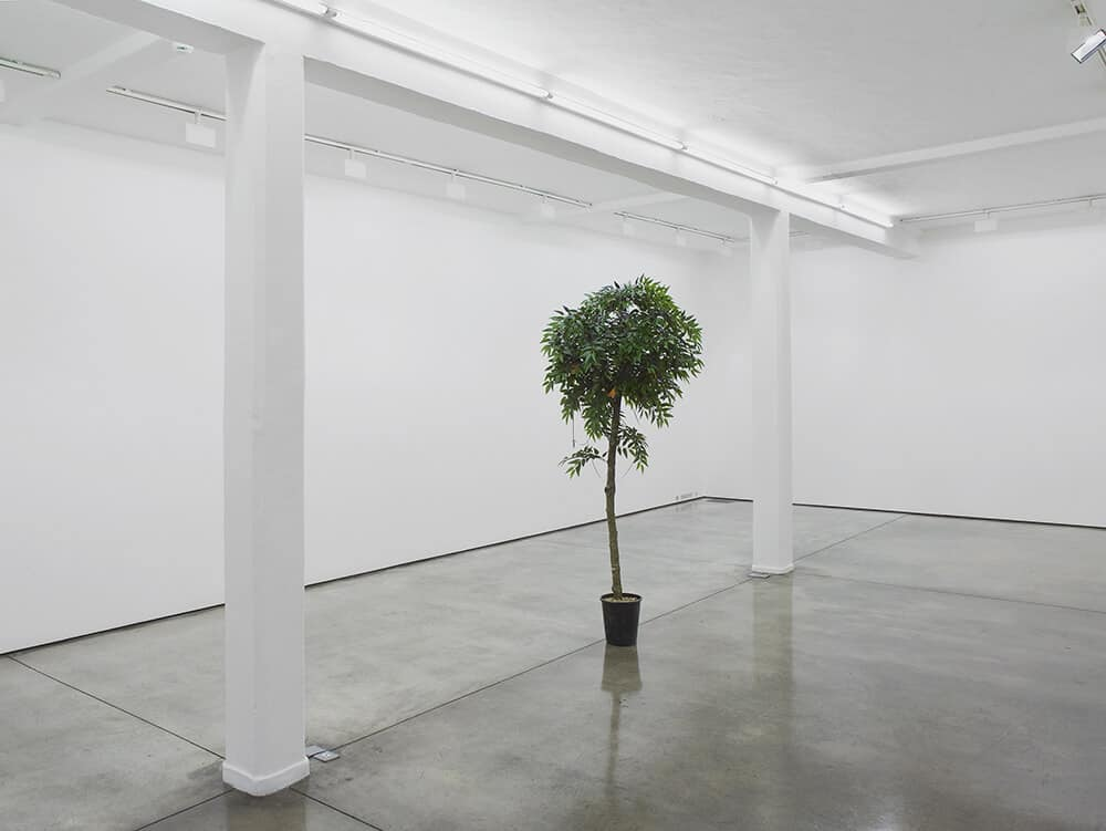 Lawrence Abu Hamdan Wissam, 2016. artificial orange tree, mini cassette, variable dimensions. © Lawrence Abu Hamdan, courtesy Maureen Paley, London.