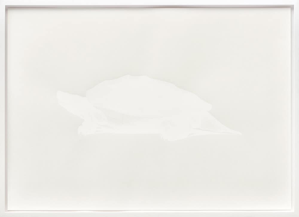 Kapwani Kiwanga, Lazerus: Heosemys Depressa, 2016. Silkscrene print on Rivoli paper 240gsm, 500 x 700m m. Edition of 10 Frame size: 542 x 742mm.