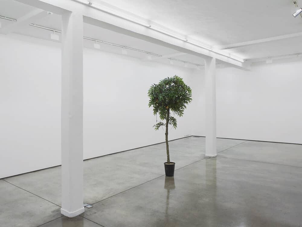 Lawrence Abu Hamdan, Wissam, 2016. Artficial orange tree, mini cassette, variable dimensions. © Lawrence Abu Hamdan. Courtesy of Maureen Paley, London.