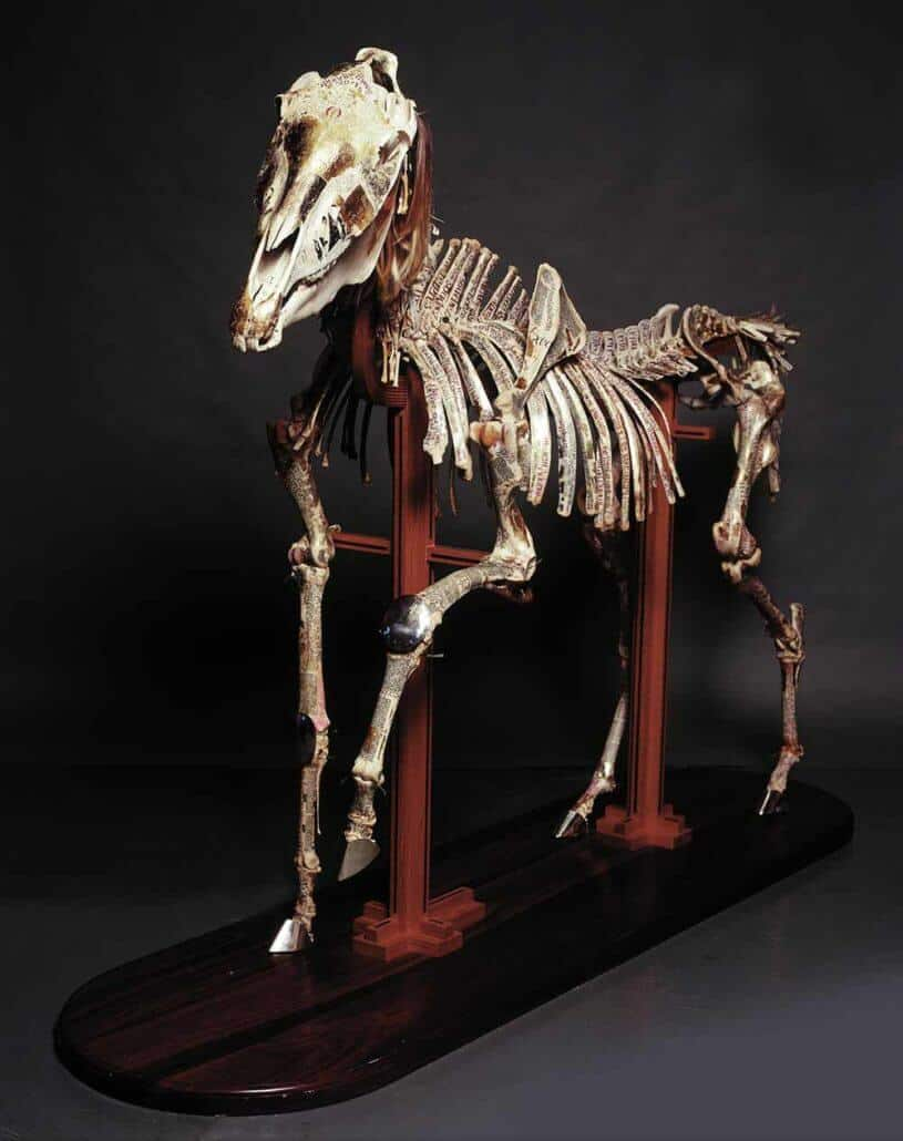 Pippa Skotnes, Book of Divine Consolation (From the Book of Iterations series), 2004 – 2018. Fully articulated horse skeleton, gold leaf, sterling silver and vellum on a wood frame and base, 181 x 196 x 57cm.