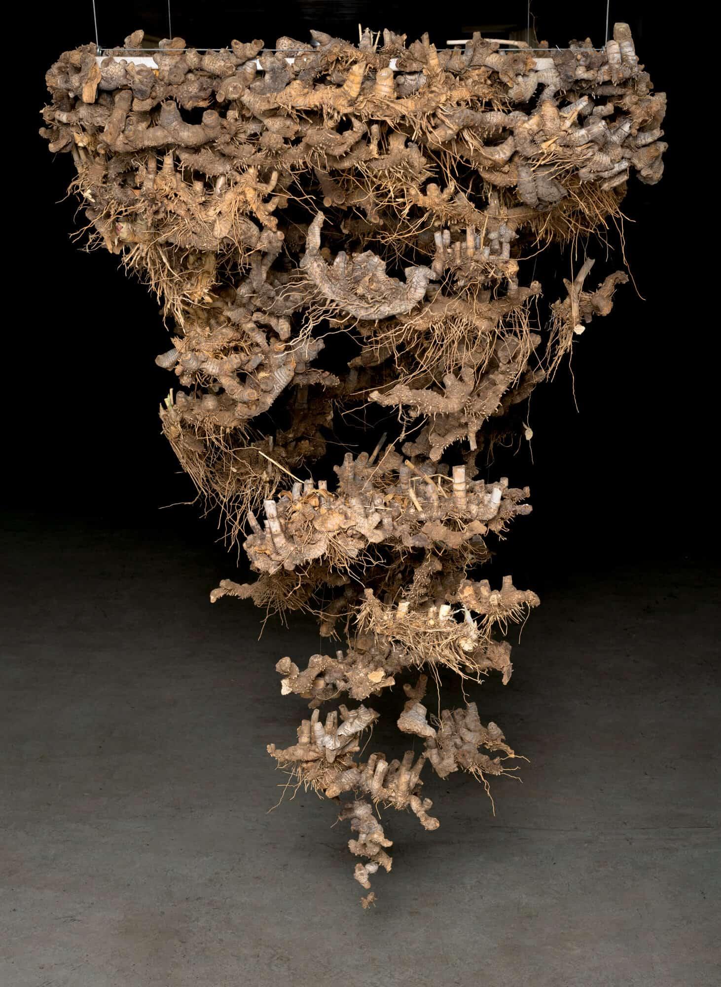 • Cecilia Maartens-Van Vuuren (Bloemfontein) Un presentimento Radici essiccate