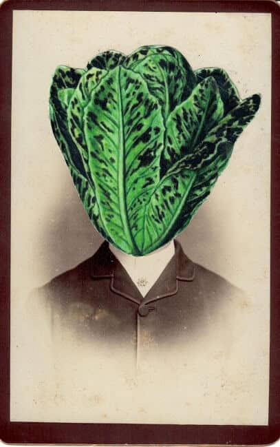 Lactuca sativa, from the series: The Secret History of Plants, 2019. Collage, 16,5 x 11cm.